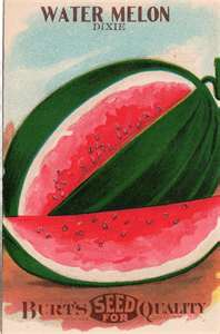 Watermelon and Persecco Parfaits