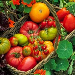 Baby Food Organic India