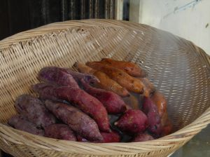 Sweet Potato & Apple Gratin