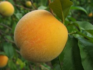 Afternoon Peach Cake
