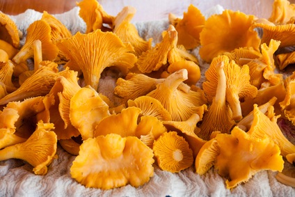 Pan Seared Wild Mushrooms