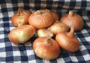 Cipolline Onions