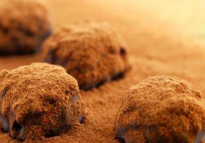 Homemade Classic Truffles
