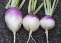 Roasted Turnips With Herbs & Feta